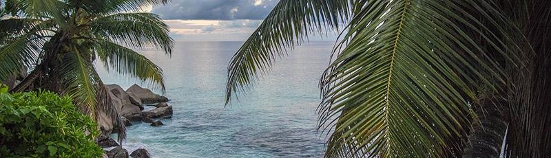 tropique plage palmier