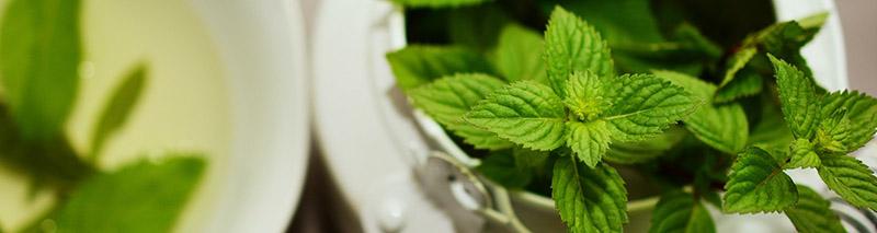 menthe fraoche eliquide sel de nicotine flavour power