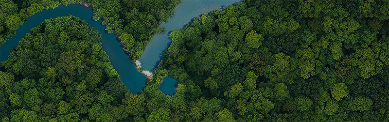 bandeau forêt eliquide végétol collection cloud